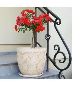 Clasik šamoto keramikos vazonas