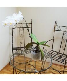 Orchidėjoms vazonas