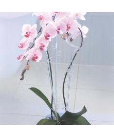 COUBI atrama gėlei