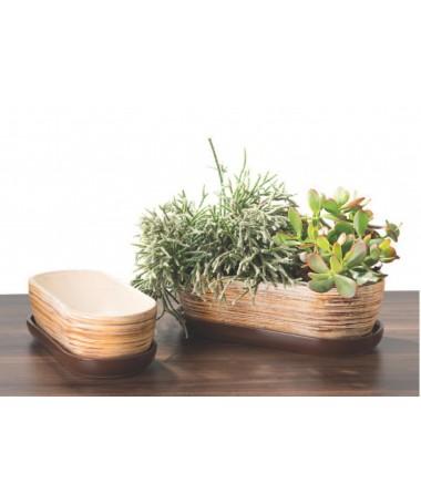 Kaktusinė HOLD 1 rudas dryžuotas