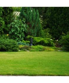 Fertiliser for coniferous plants IGLAK