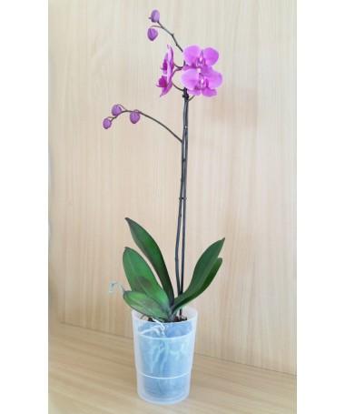 COUBI 12,5 cm vaz. orchidėjoms permatomas