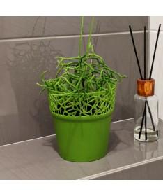 Naturo plastiko vazonas žalias